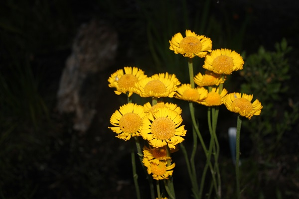 The Garden Club of Georgia, Inc.   Projects and Programs on